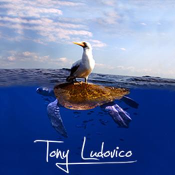 tony-Ludovico